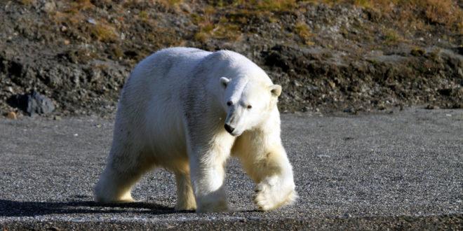 Russische Reiseregionen & Landschaften: Wo leben welche Tiere in ...